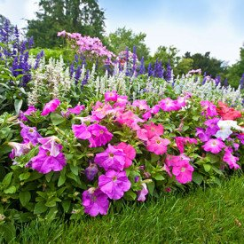 lawn and landscape flowers