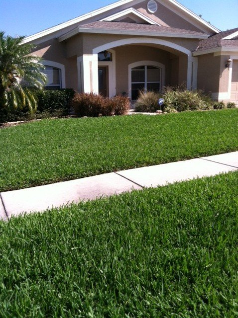 Palm Harbor Lawn Care Service Spectrum Landscape Pest Control Lutz Florida
